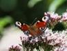 Warwickshire Butterflies