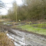More marsh clearance