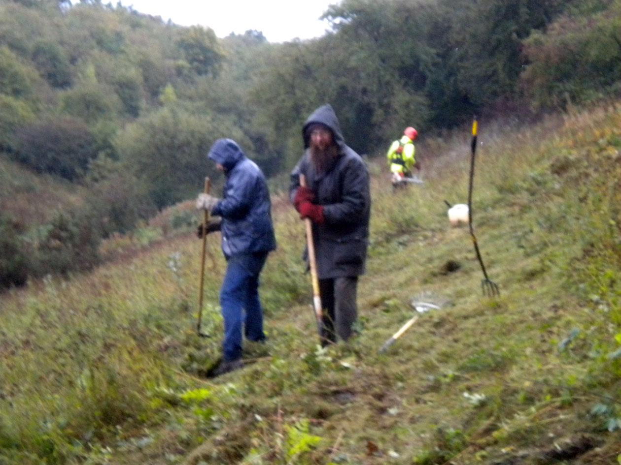 Ashlawn Cutting, section F5