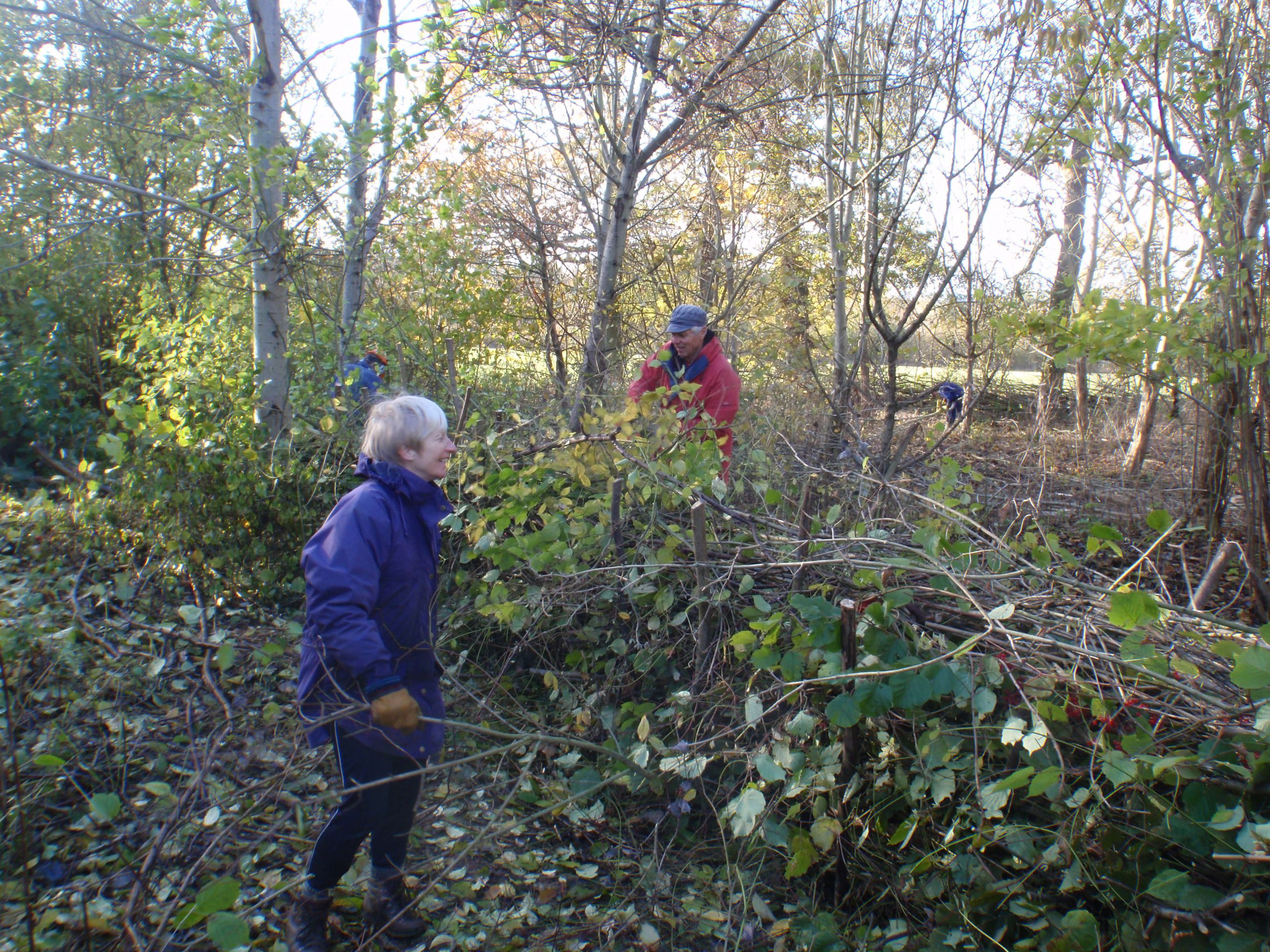 Mike & Ann, making a nice dense hedge!?