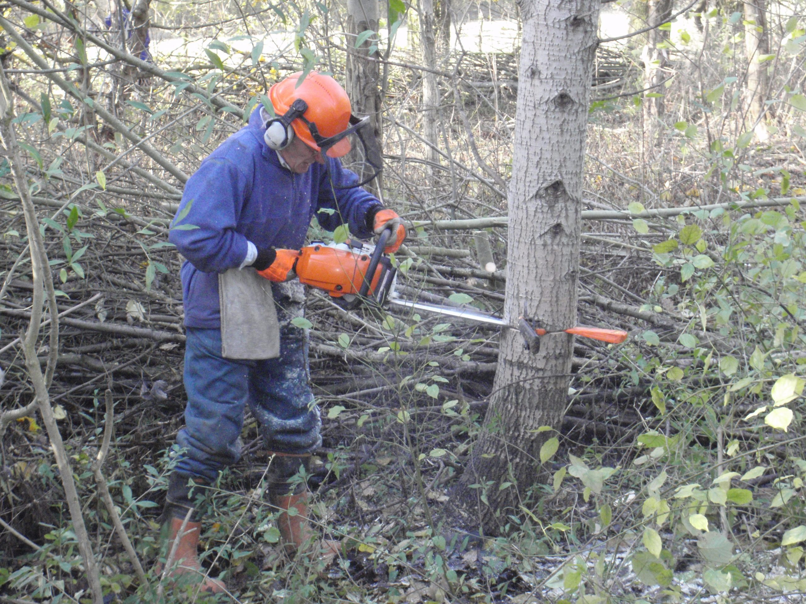 A delicate job with Chainsaw for Ian