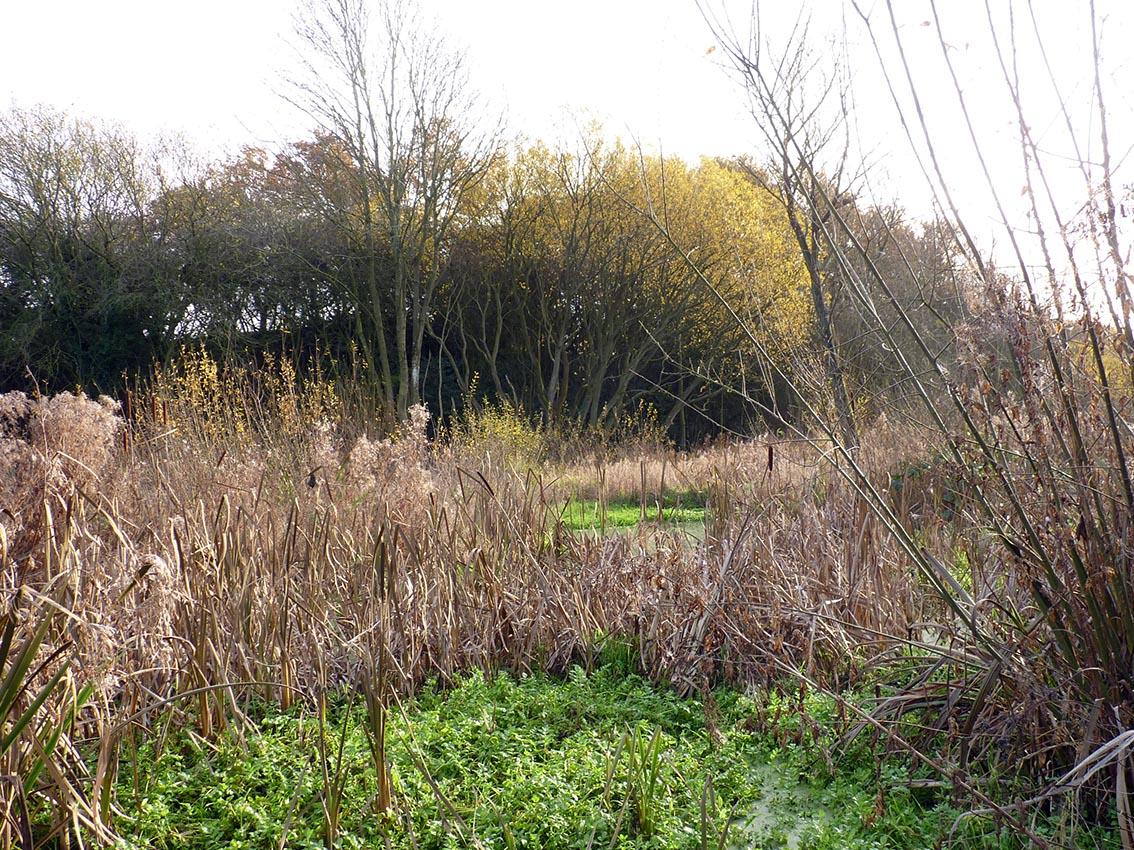 663 Pytchley Marsh