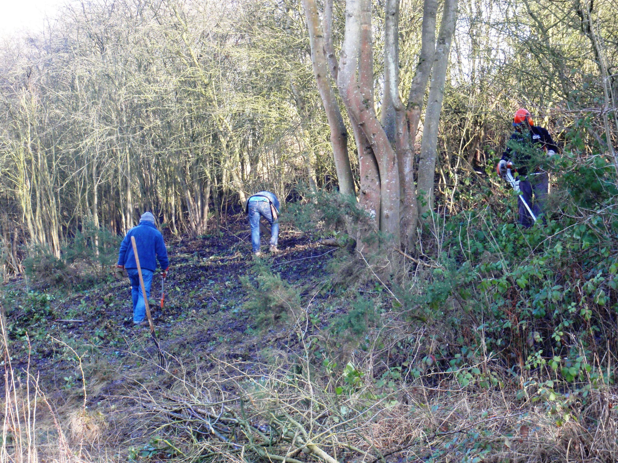 Clearing the meadow patch
