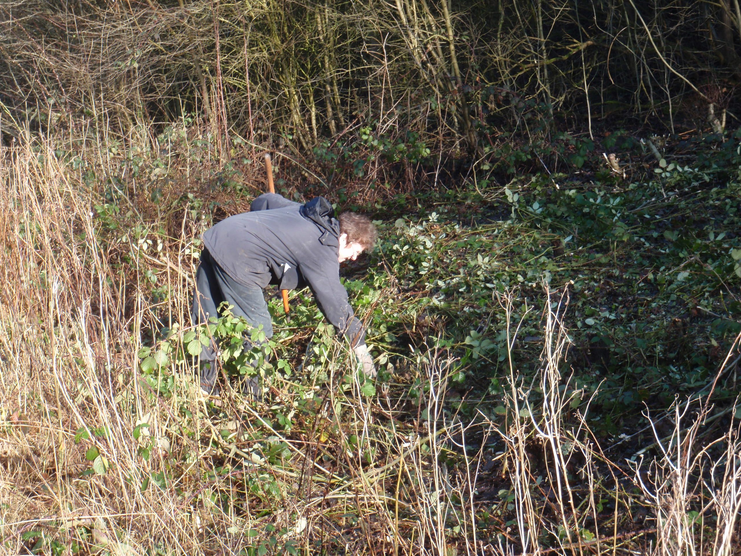 Margaret clearing bramble