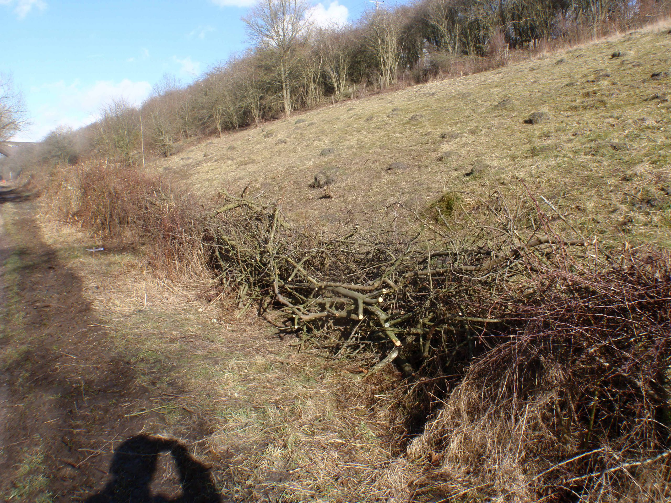 A not very tidy Dead Hedge