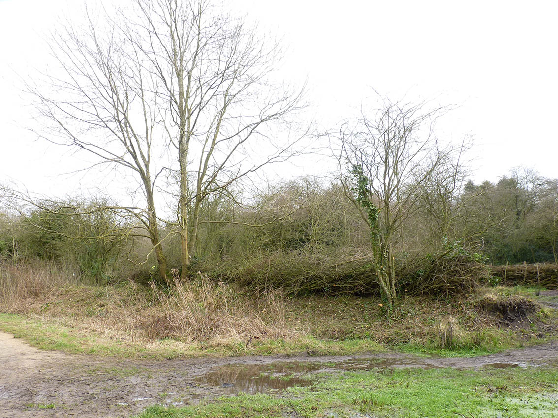 Section D, Jolly's Hedge