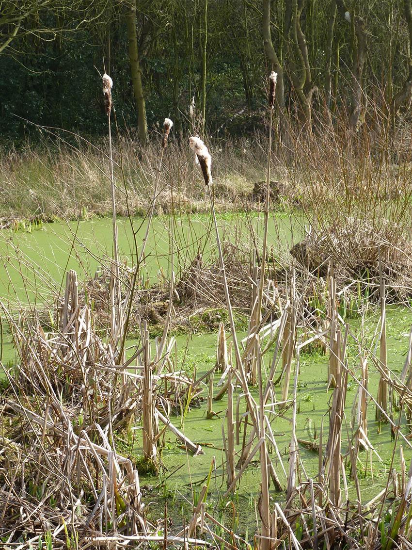 Pytchley Marsh