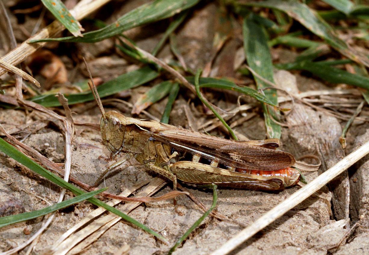 Ashlawn-f5e-grasshopper-18-8-16-tony-penycate