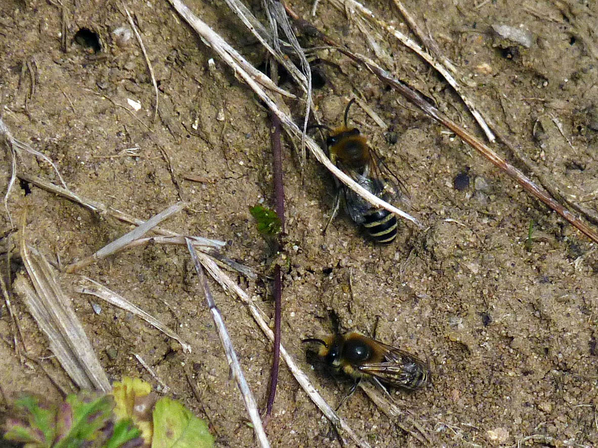 cycleway-consul-rd-ivy-bee-4-10-16-p-parr-0760