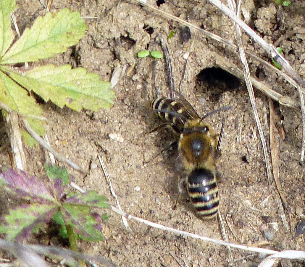 cycleway-consul-rd-ivy-bee-4-10-16-p-parr-0766