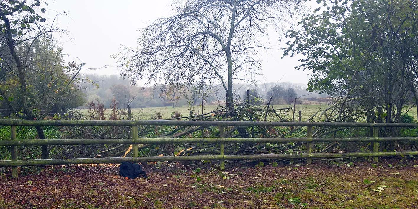 Swift-hedge-laying-begins-12-11-16