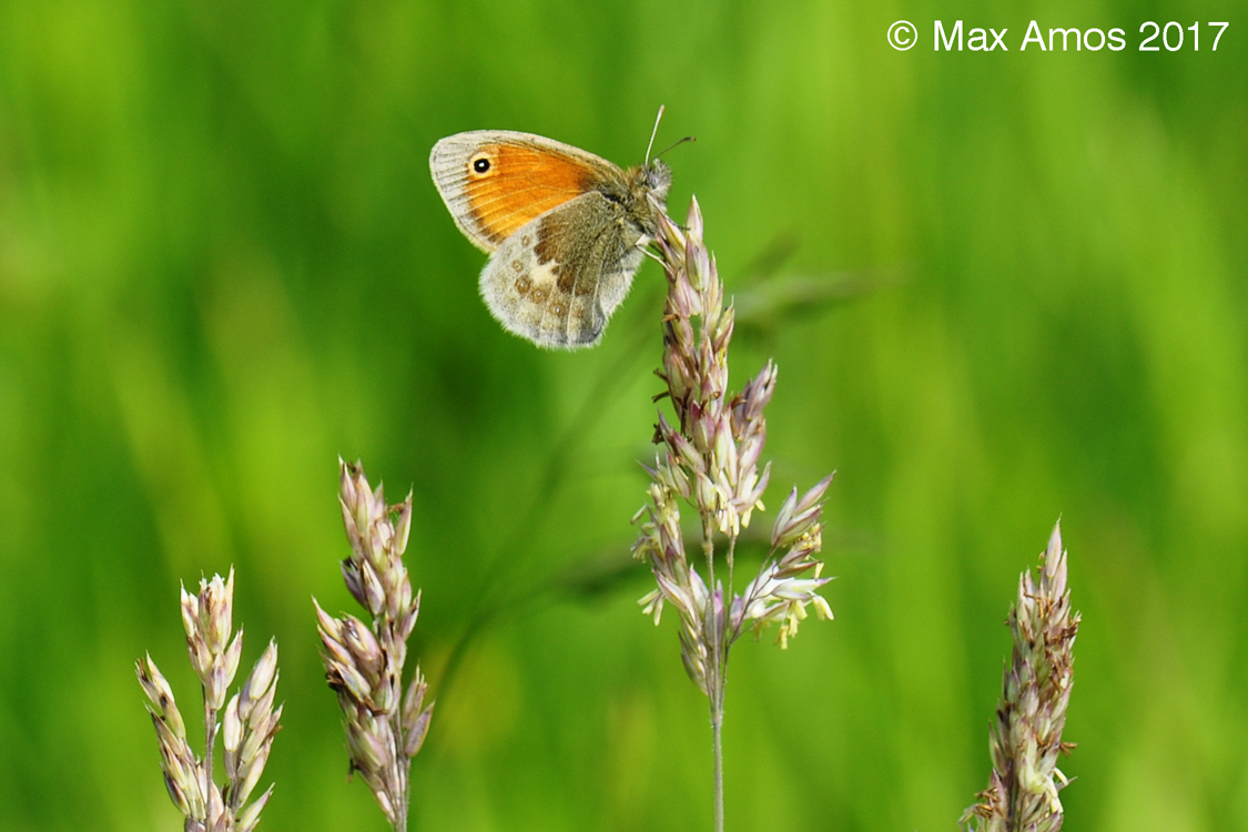 2017-06-19-Small_Heath